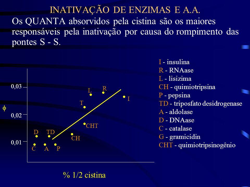 INATIVAÇÃO DE ENZIMAS E A.A.