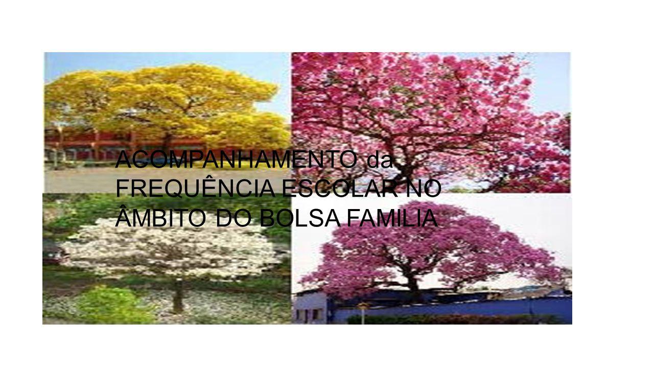 ACOMPANHAMENTO da FREQUÊNCIA ESCOLAR NO ÂMBITO DO BOLSA FAMILIA