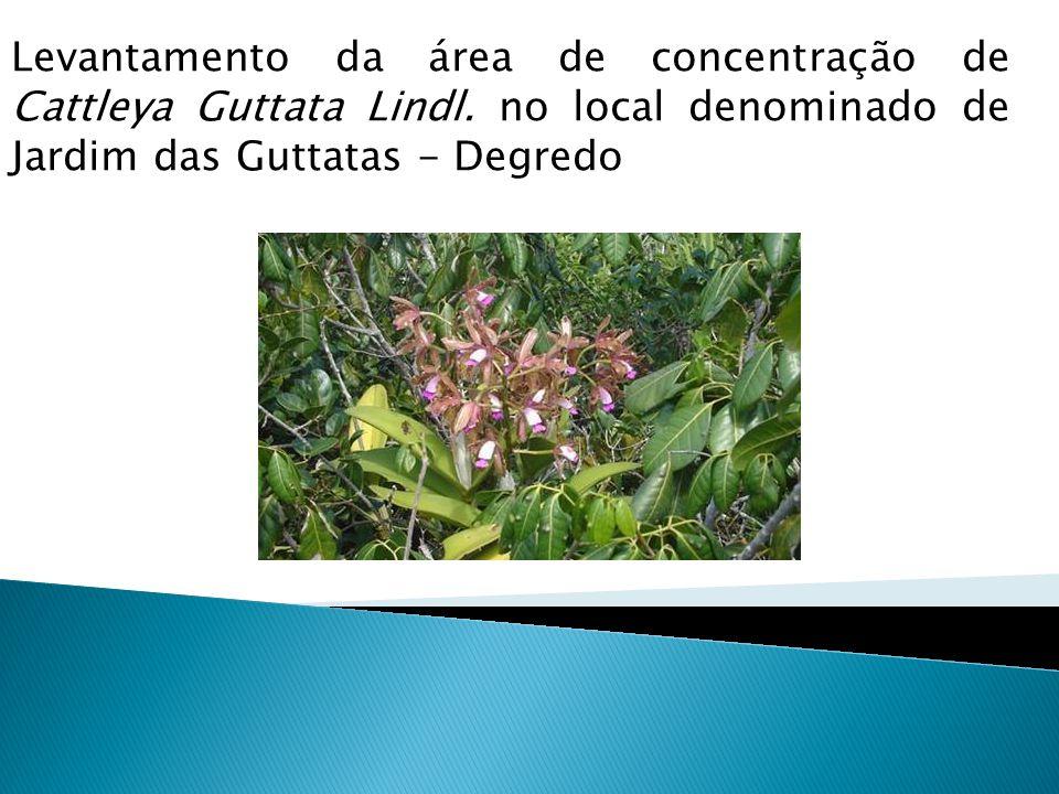 Levantamento da área de concentração de Cattleya Guttata Lindl. no local denominado de Jardim das Guttatas - Degredo