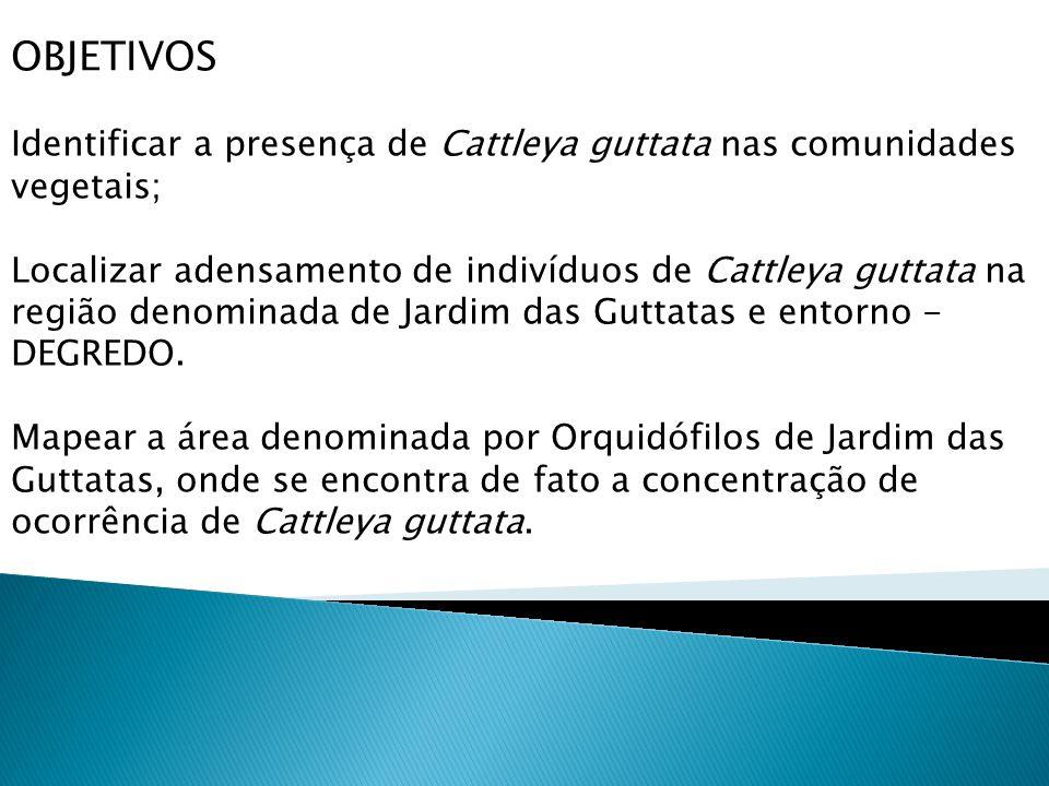 OBJETIVOS Identificar a presença de Cattleya guttata nas comunidades vegetais; Localizar adensamento de indivíduos de Cattleya guttata na região denominada de Jardim das Guttatas e entorno - DEGREDO.