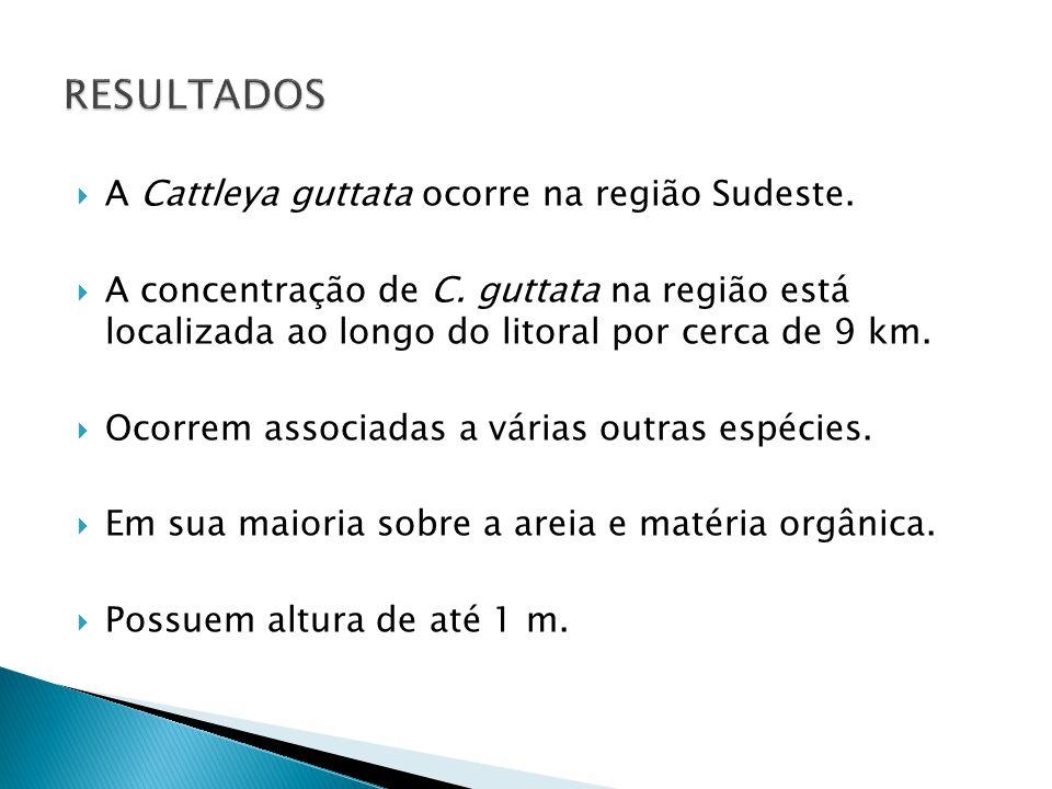  A Cattleya guttata ocorre na região Sudeste.  A concentração de C. guttata na região está localizada ao longo do litoral por cerca de 9 km.  Ocorr