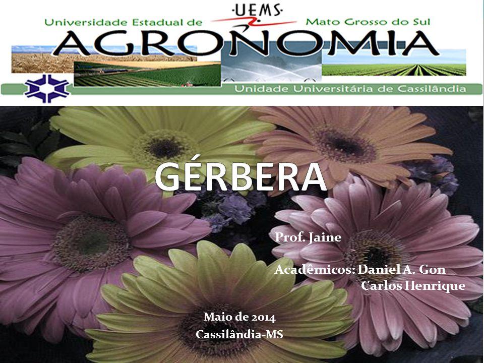 INTRODUÇÃO Gênero : Gérbera; Família : Asteraceae; Originária : America do Sul, Africa, Madagascar; Botânico : R.