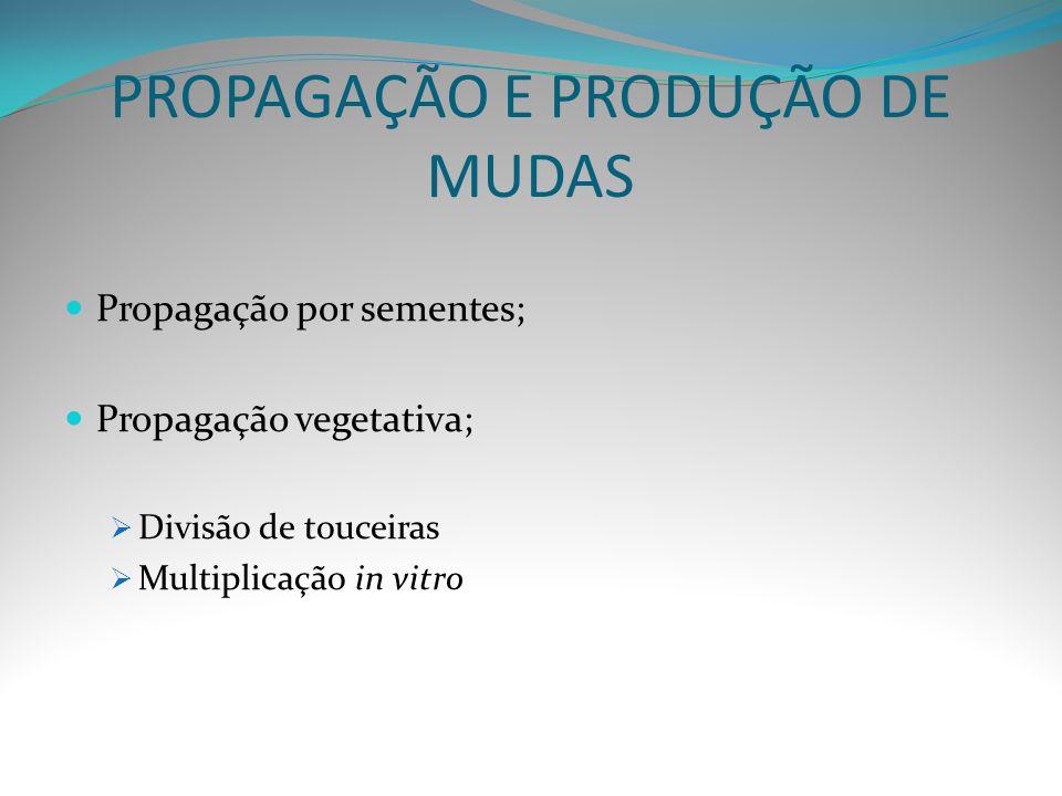 PROPAGAÇÃO E PRODUÇÃO DE MUDAS Propagação por sementes; Propagação vegetativa;  Divisão de touceiras  Multiplicação in vitro
