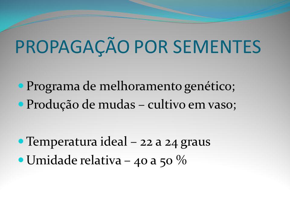 PROPAGAÇÃO POR SEMENTES Programa de melhoramento genético; Produção de mudas – cultivo em vaso; Temperatura ideal – 22 a 24 graus Umidade relativa – 4