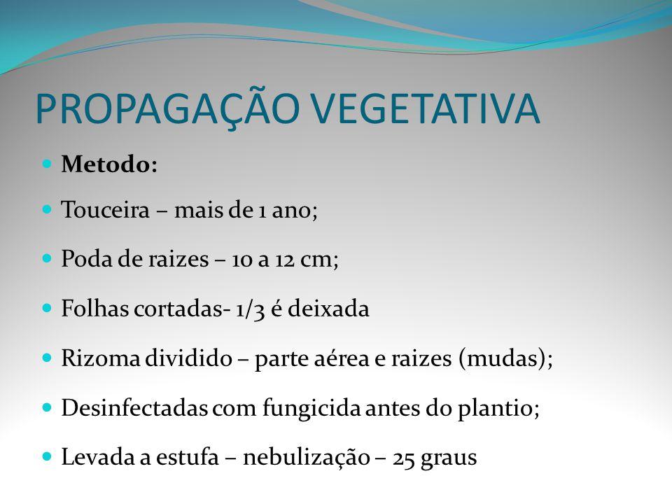PROPAGAÇÃO VEGETATIVA Metodo: Touceira – mais de 1 ano; Poda de raizes – 10 a 12 cm; Folhas cortadas- 1/3 é deixada Rizoma dividido – parte aérea e ra