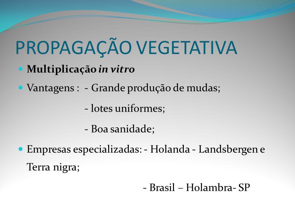 PROPAGAÇÃO VEGETATIVA Multiplicação in vitro Vantagens : - Grande produção de mudas; - lotes uniformes; - Boa sanidade; Empresas especializadas: - Hol