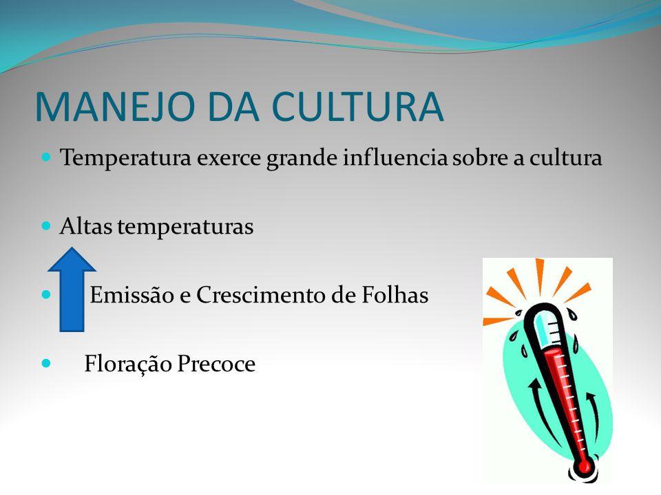 MANEJO DA CULTURA Temperatura exerce grande influencia sobre a cultura Altas temperaturas Emissão e Crescimento de Folhas Floração Precoce