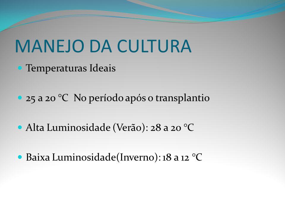 MANEJO DA CULTURA Temperaturas Ideais 25 a 20 °C No período após o transplantio Alta Luminosidade (Verão): 28 a 20 °C Baixa Luminosidade(Inverno): 18