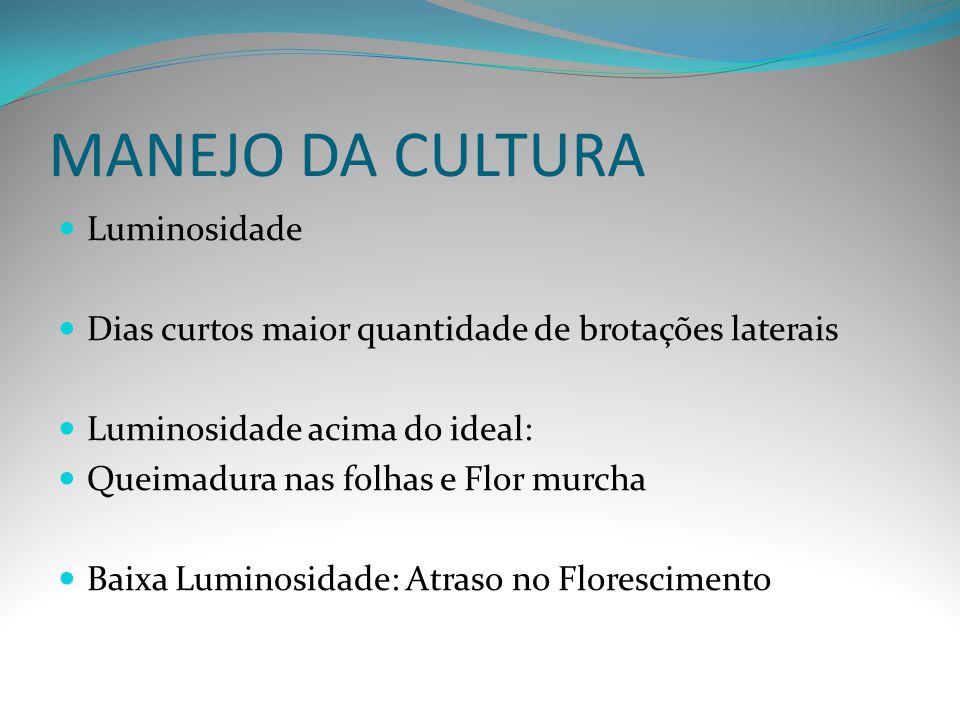 MANEJO DA CULTURA Luminosidade Dias curtos maior quantidade de brotações laterais Luminosidade acima do ideal: Queimadura nas folhas e Flor murcha Bai