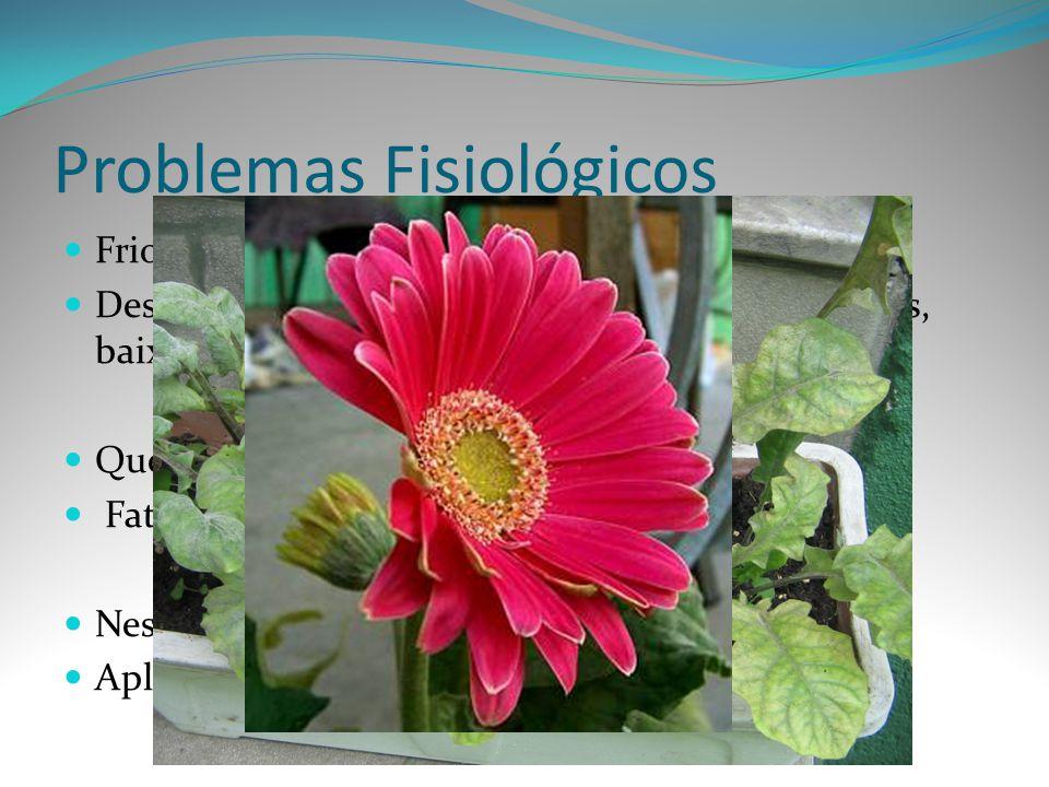 Problemas Fisiológicos Frio Desuniformidades, abortamento dos botões florais, baixa absorção de nutrientes, deficiência de Boro. Queda de pétalas Fato