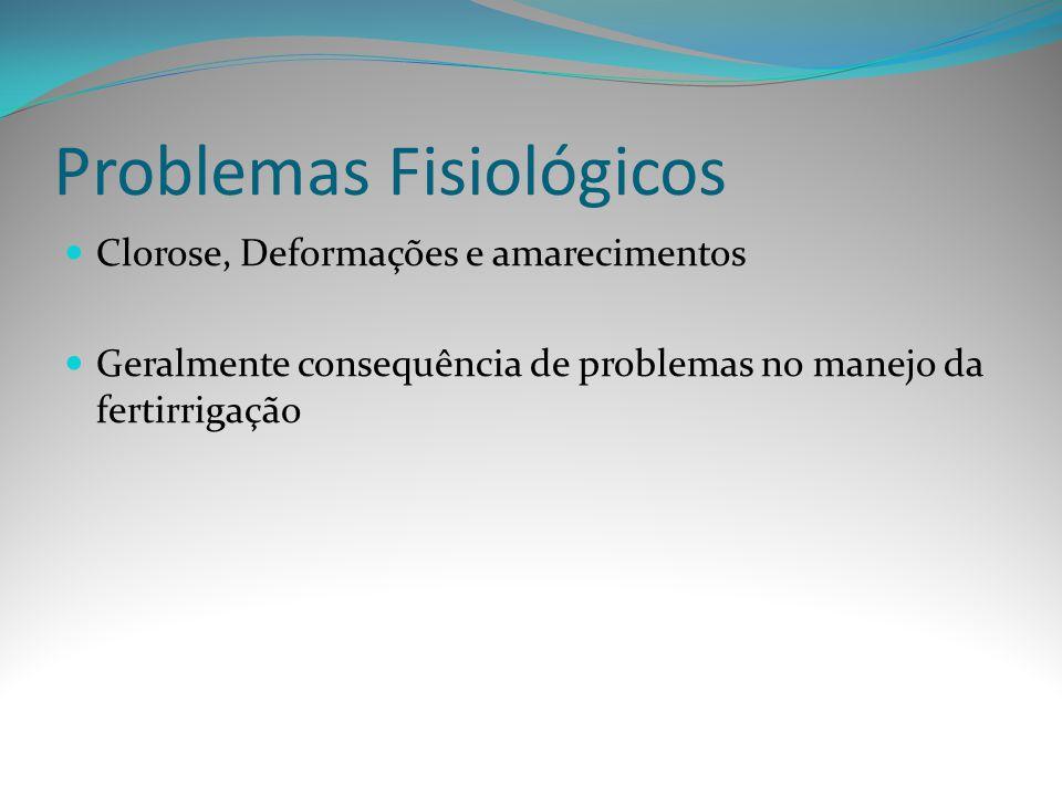 Problemas Fisiológicos Clorose, Deformações e amarecimentos Geralmente consequência de problemas no manejo da fertirrigação