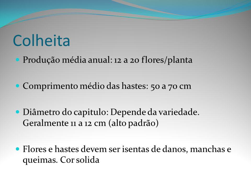 Colheita Produção média anual: 12 a 20 flores/planta Comprimento médio das hastes: 50 a 70 cm Diâmetro do capitulo: Depende da variedade. Geralmente 1