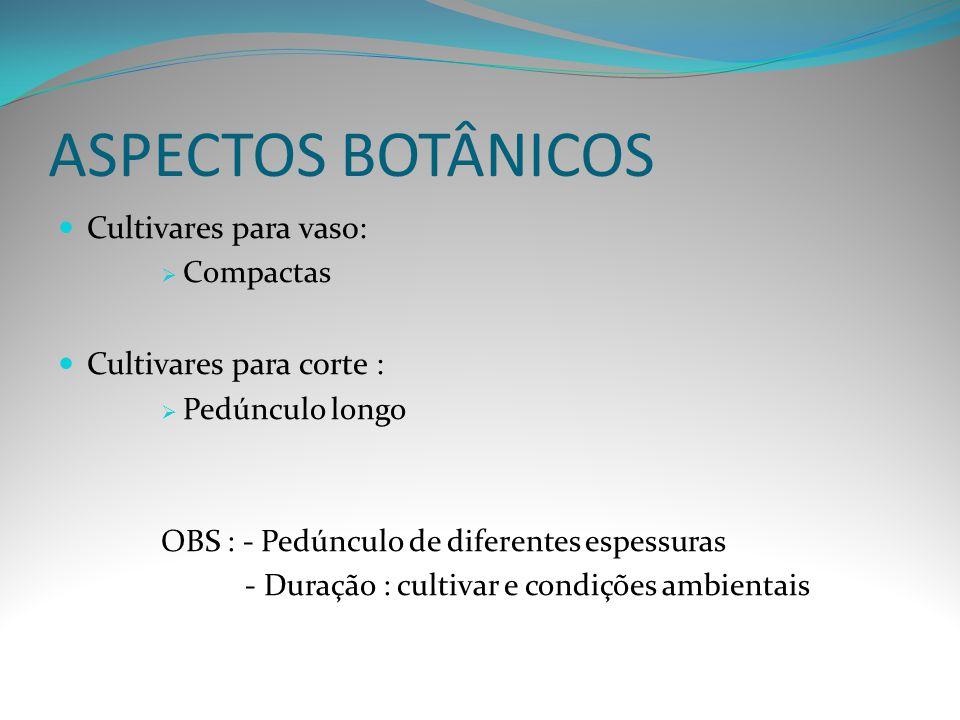 ASPECTOS BOTÂNICOS Cultivares para vaso:  Compactas Cultivares para corte :  Pedúnculo longo OBS : - Pedúnculo de diferentes espessuras - Duração :