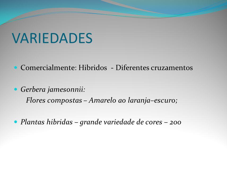VARIEDADES Comercialmente: Hibridos - Diferentes cruzamentos Gerbera jamesonnii: Flores compostas – Amarelo ao laranja–escuro; Plantas hibridas – gran