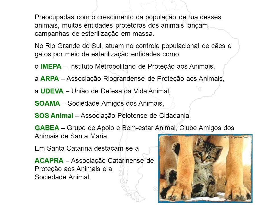 Infelizmente, na mesma proporção em que cresce o número de animais de estimação, aumenta o de animais abandonados. Muitas pessoas, movidas por impulso