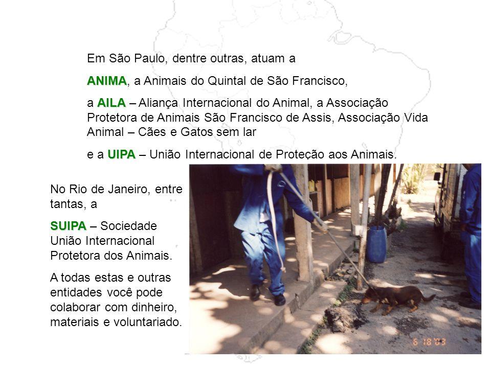 Em São Paulo, dentre outras, atuam a ANIMA ANIMA, a Animais do Quintal de São Francisco, AILA a AILA – Aliança Internacional do Animal, a Associação Protetora de Animais São Francisco de Assis, Associação Vida Animal – Cães e Gatos sem lar UIPA e a UIPA – União Internacional de Proteção aos Animais.