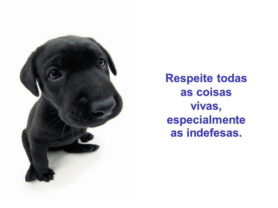 O respeito aos direitos dos animais deve ser encarado como uma atitude ética e moral por parte dos humanos. Os seres não–humanos devem ser incluídos n