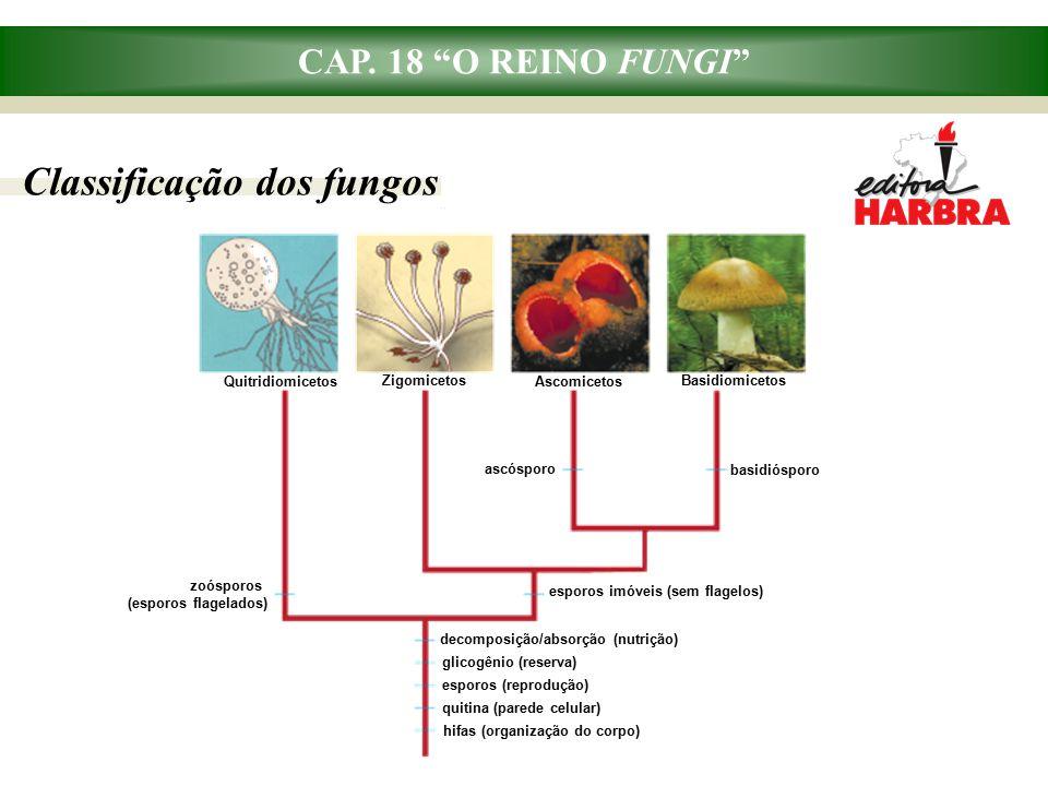 CAP. 18 O REINO FUNGI Micorrizas: importância para a vegetação terrestre