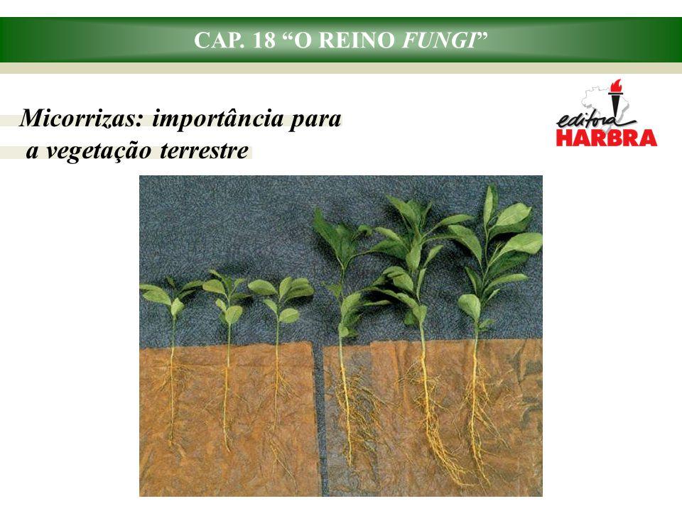 CAP. 18 O REINO FUNGI Liquens: associação de fungos e algas