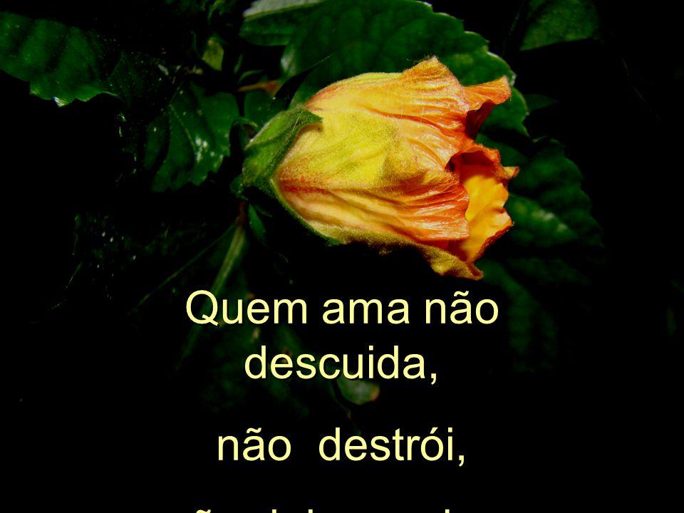 És do mundo o coração que pulsa forte. És a força do norte em território brasileiro. Como deixar perder área tão valiosa? És do mundo o coração que pu