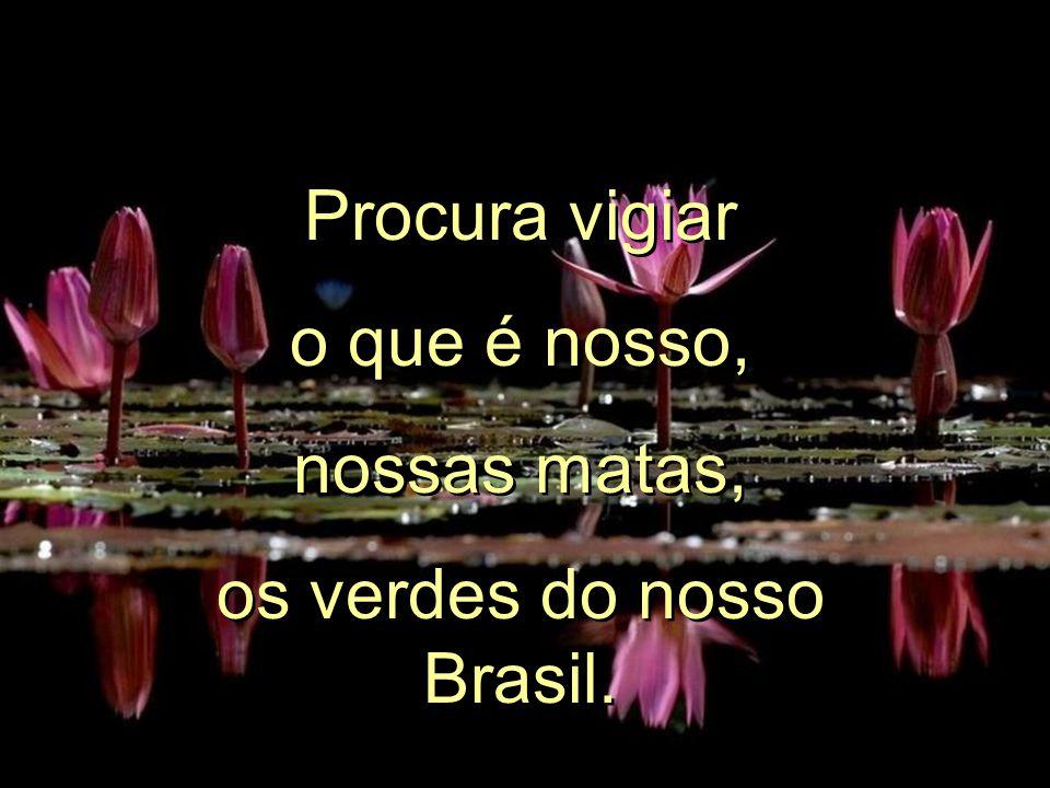 Procura vigiar o que é nosso, nossas matas, os verdes do nosso Brasil.