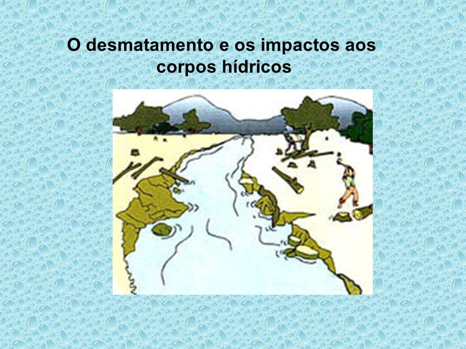 O desmatamento e os impactos aos corpos hídricos