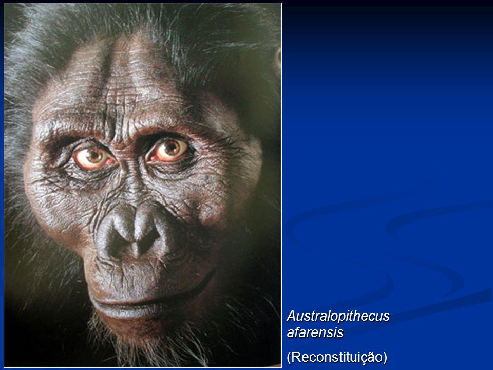 Australopithecus afarensis (Reconstituição)