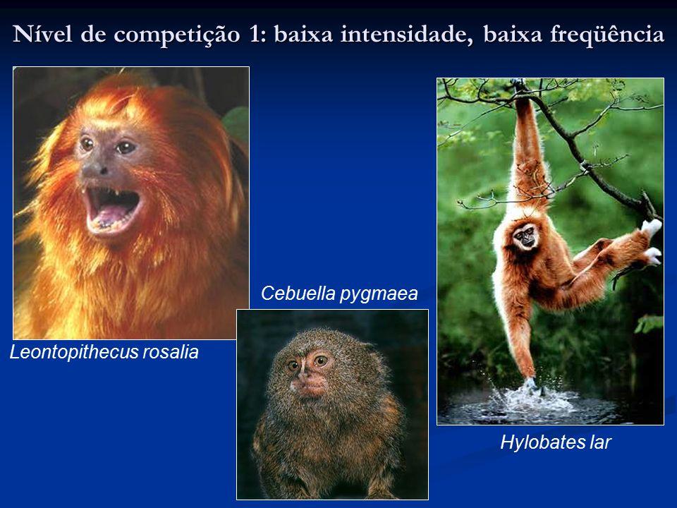 Nível de competição 1: baixa intensidade, baixa freqüência Hylobates lar Leontopithecus rosalia Cebuella pygmaea