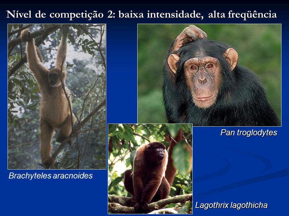 Nível de competição 3: alta intensidade, baixa freqüência Gorilla gorilla Erythrocebus patas Pongo pygmaeus