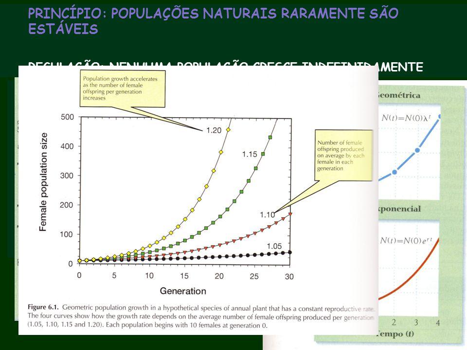 """PRINCÍPIO: POPULAÇÕES NATURAIS RARAMENTE SÃO ESTÁVEIS Modelos populacionais assumem crescimento """"multiplicativo"""" 1 indivíduo origina 2, que originam 4"""