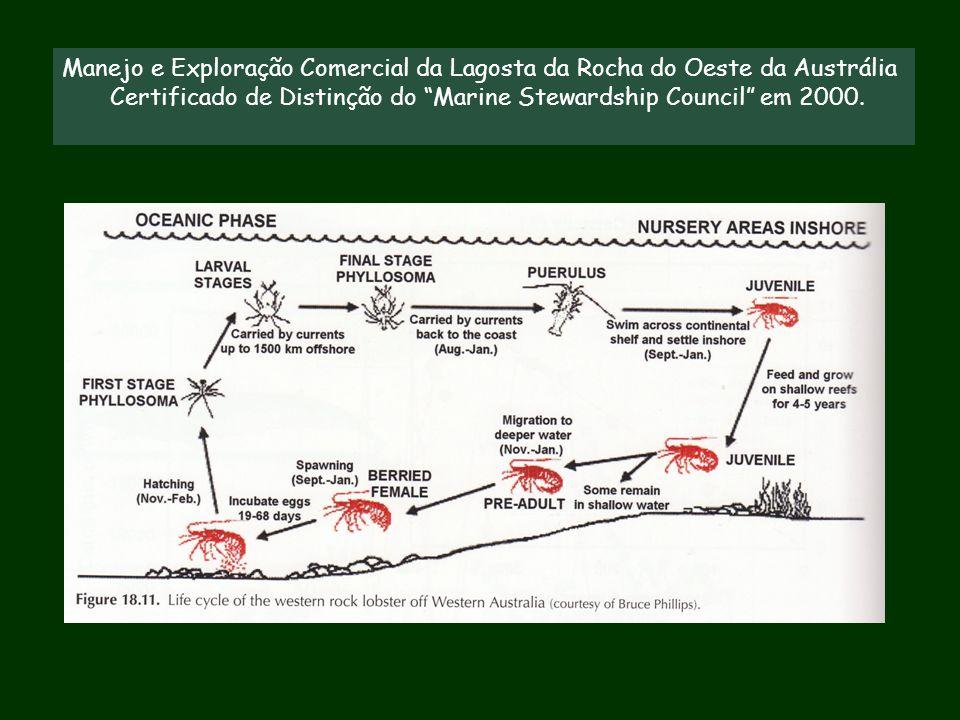 """Manejo e Exploração Comercial da Lagosta da Rocha do Oeste da Austrália Certificado de Distinção do """"Marine Stewardship Council"""" em 2000."""