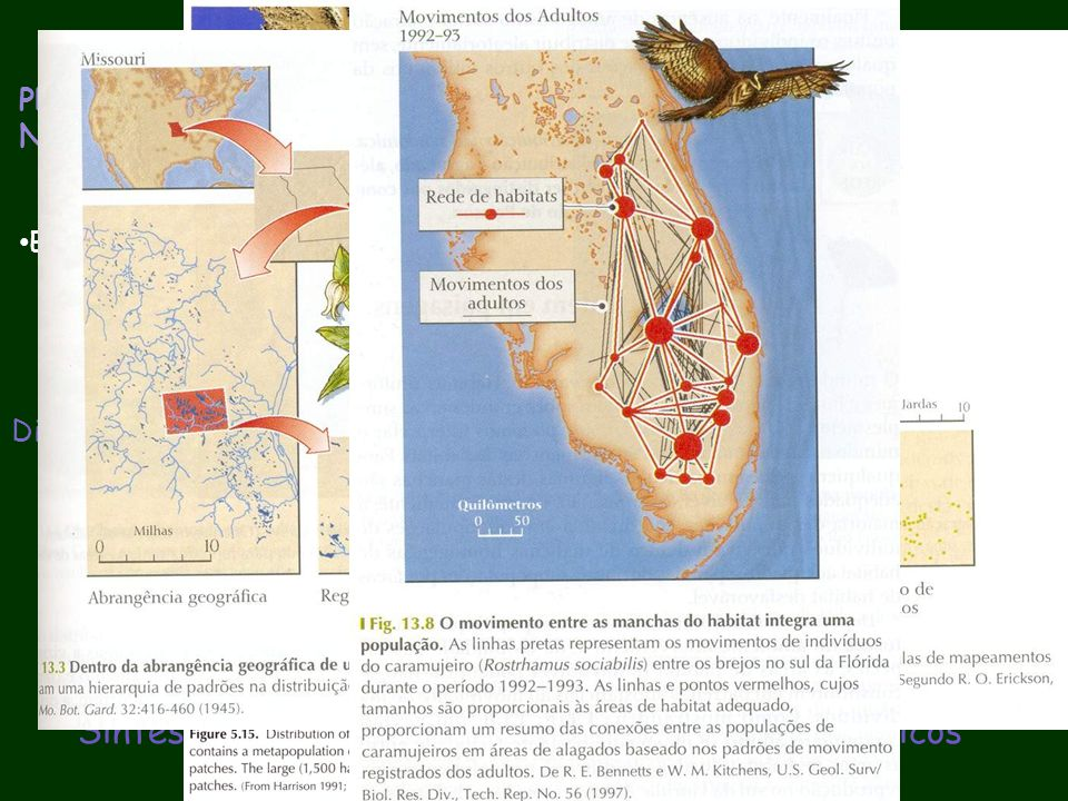 Históricos de Vida: Implicações populacionais Biomassa e tamanho populacional, p.ex.