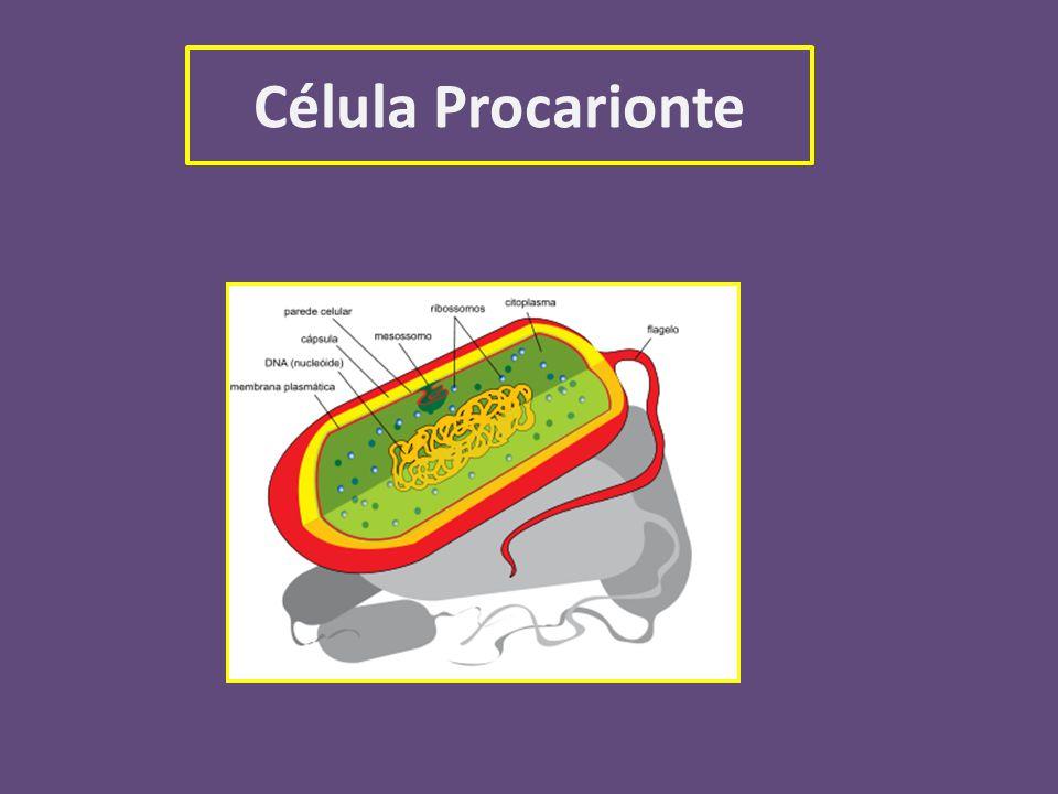 Ciclo Celular Ciclo celular É o periodo que se inicia com o surgimento de uma célula a partir da divisão de outra preexistente.