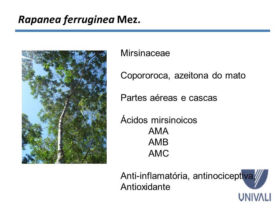 Rapanea ferruginea Mez. Mirsinaceae Copororoca, azeitona do mato Partes aéreas e cascas Ácidos mirsinoicos AMA AMB AMC Anti-inflamatória, antinocicept