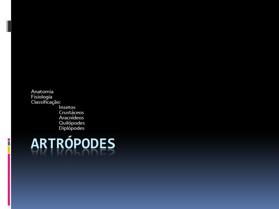 Anatomia Fisiologia Classificação: Insetos Crustáceos Aracnídeos Quilópodes Diplópodes