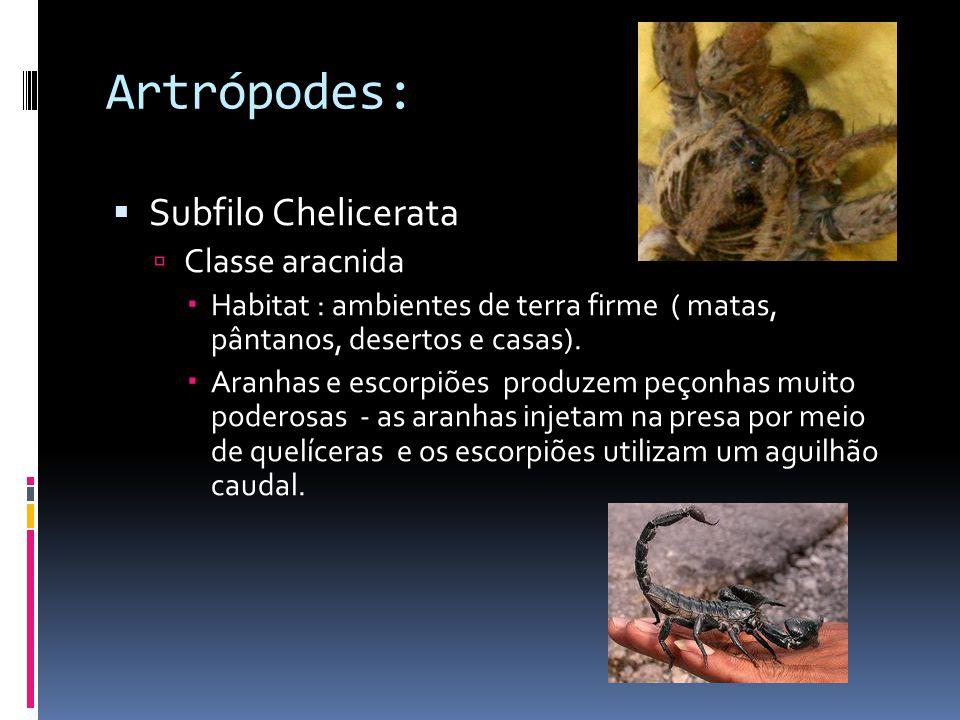 Artrópodes:  Subfilo Chelicerata  Classe aracnida  Habitat : ambientes de terra firme ( matas, pântanos, desertos e casas).