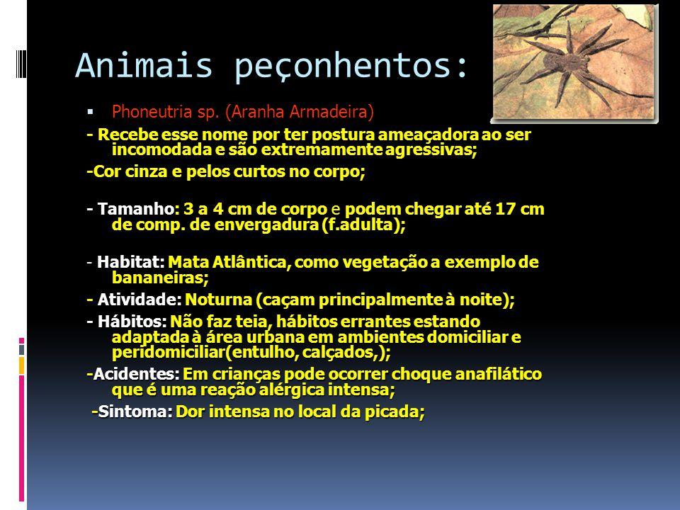 Animais peçonhentos:  Phoneutria sp.