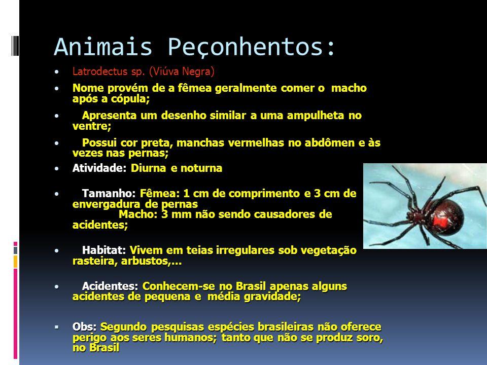 Animais Peçonhentos: Latrodectus sp.