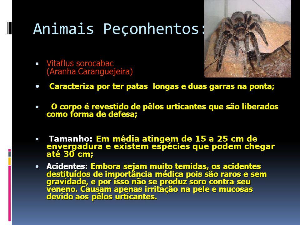 Animais Peçonhentos:  Vitaflus sorocabac (Aranha Caranguejeira) Caracteriza por ter patas longas e duas garras na ponta; Caracteriza por ter patas longas e duas garras na ponta; O corpo é revestido de pêlos urticantes que são liberados como forma de defesa; O corpo é revestido de pêlos urticantes que são liberados como forma de defesa; Tamanho: Em média atingem de 15 a 25 cm de envergadura e existem espécies que podem chegar até 30 cm; Tamanho: Em média atingem de 15 a 25 cm de envergadura e existem espécies que podem chegar até 30 cm; Acidentes: Embora sejam muito temidas, os acidentes destituídos de importância médica pois são raros e sem gravidade, e por isso não se produz soro contra seu veneno.