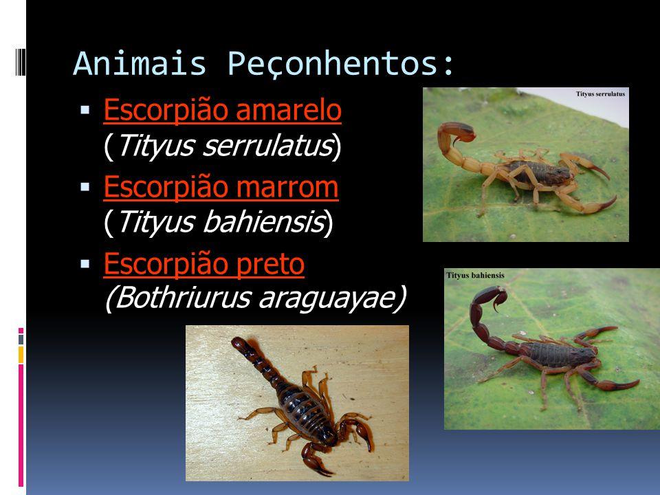 Animais Peçonhentos:  Escorpião amarelo (Tityus serrulatus)  Escorpião marrom (Tityus bahiensis)  Escorpião preto (Bothriurus araguayae)