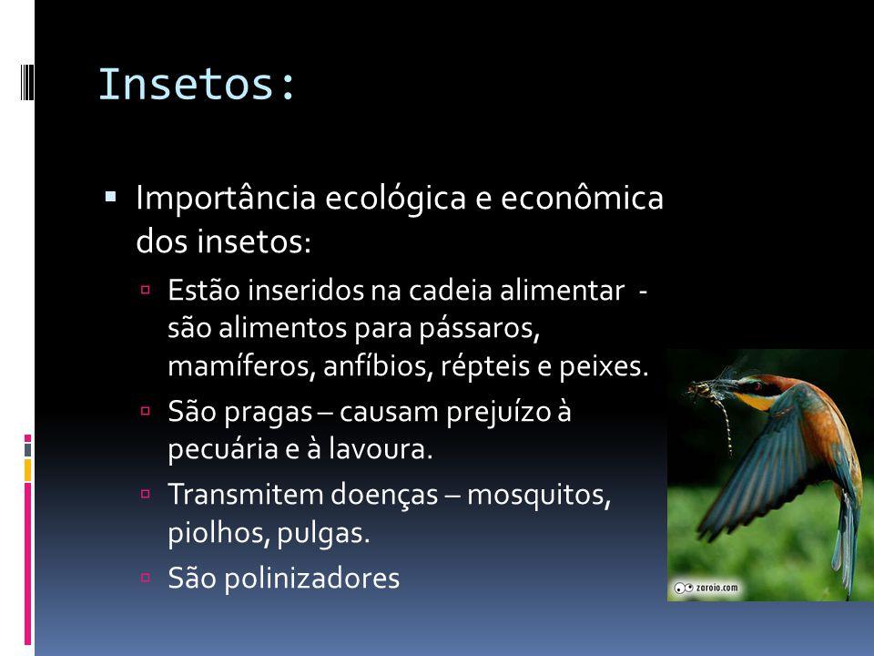 Insetos:  Importância ecológica e econômica dos insetos:  Estão inseridos na cadeia alimentar - são alimentos para pássaros, mamíferos, anfíbios, répteis e peixes.