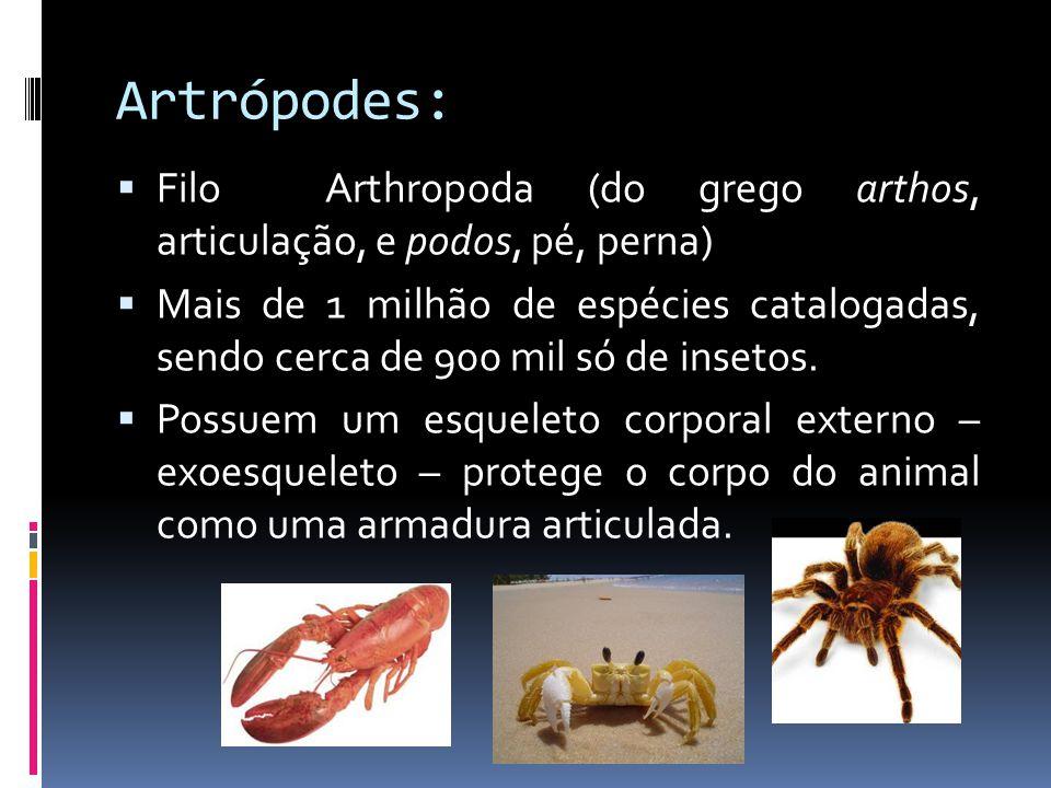  Filo Arthropoda (do grego arthos, articulação, e podos, pé, perna)  Mais de 1 milhão de espécies catalogadas, sendo cerca de 900 mil só de insetos.