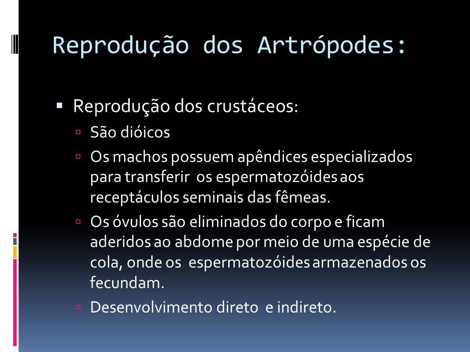 Reprodução dos Artrópodes:  Reprodução dos crustáceos:  São dióicos  Os machos possuem apêndices especializados para transferir os espermatozóides aos receptáculos seminais das fêmeas.