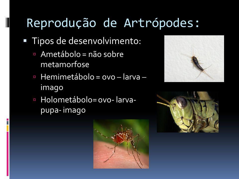 Reprodução de Artrópodes:  Tipos de desenvolvimento:  Ametábolo = não sobre metamorfose  Hemimetábolo = ovo – larva – imago  Holometábolo= ovo- larva- pupa- imago
