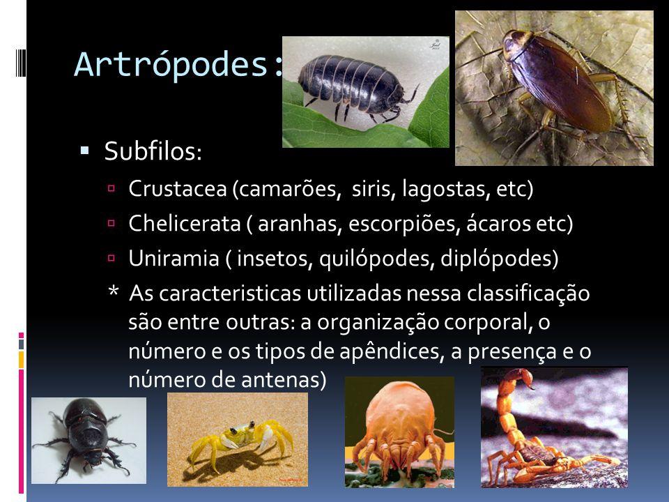 Artrópodes:  Subfilos:  Crustacea (camarões, siris, lagostas, etc)  Chelicerata ( aranhas, escorpiões, ácaros etc)  Uniramia ( insetos, quilópodes, diplópodes) * As caracteristicas utilizadas nessa classificação são entre outras: a organização corporal, o número e os tipos de apêndices, a presença e o número de antenas)