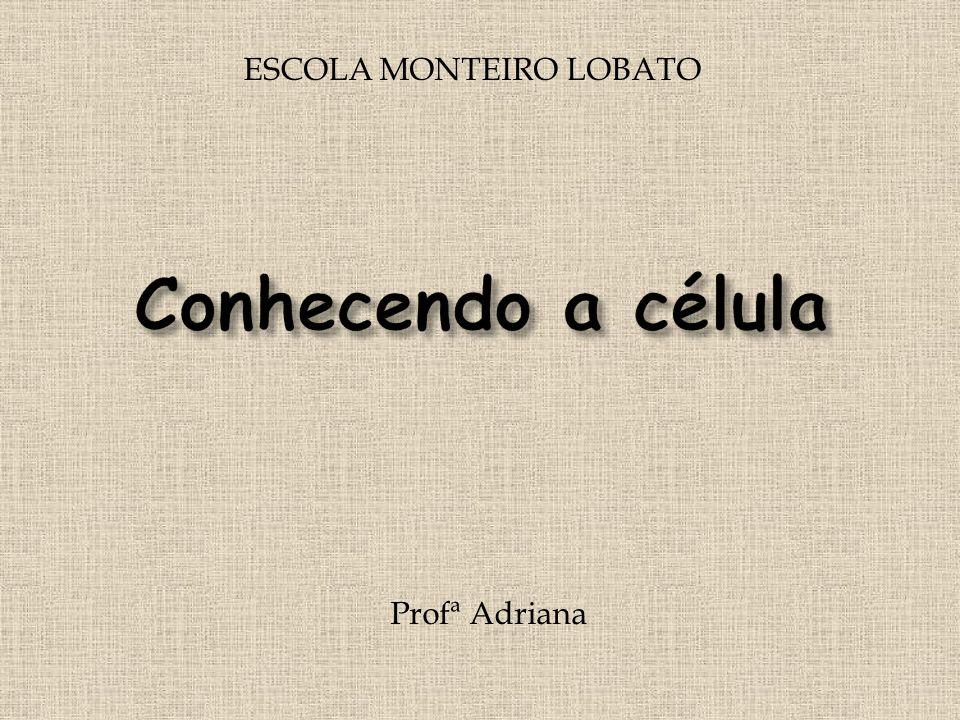 ESCOLA MONTEIRO LOBATO Profª Adriana