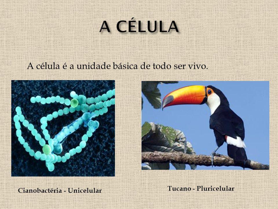 A célula é a unidade básica de todo ser vivo. Cianobactéria - Unicelular Tucano - Pluricelular