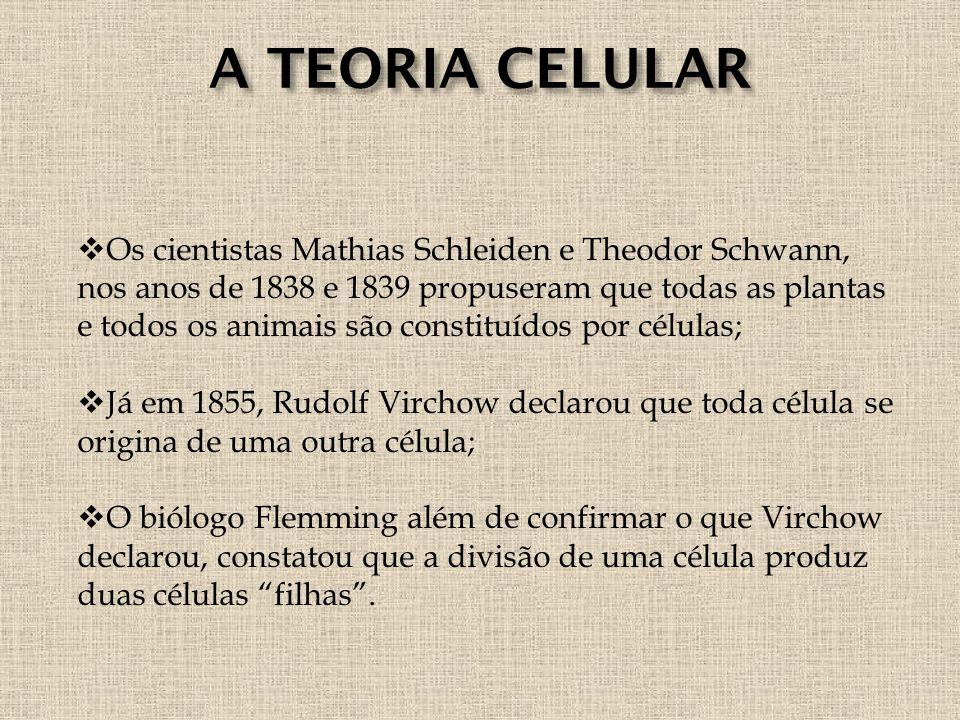 A TEORIA CELULAR  Os cientistas Mathias Schleiden e Theodor Schwann, nos anos de 1838 e 1839 propuseram que todas as plantas e todos os animais são constituídos por células;  Já em 1855, Rudolf Virchow declarou que toda célula se origina de uma outra célula;  O biólogo Flemming além de confirmar o que Virchow declarou, constatou que a divisão de uma célula produz duas células filhas .