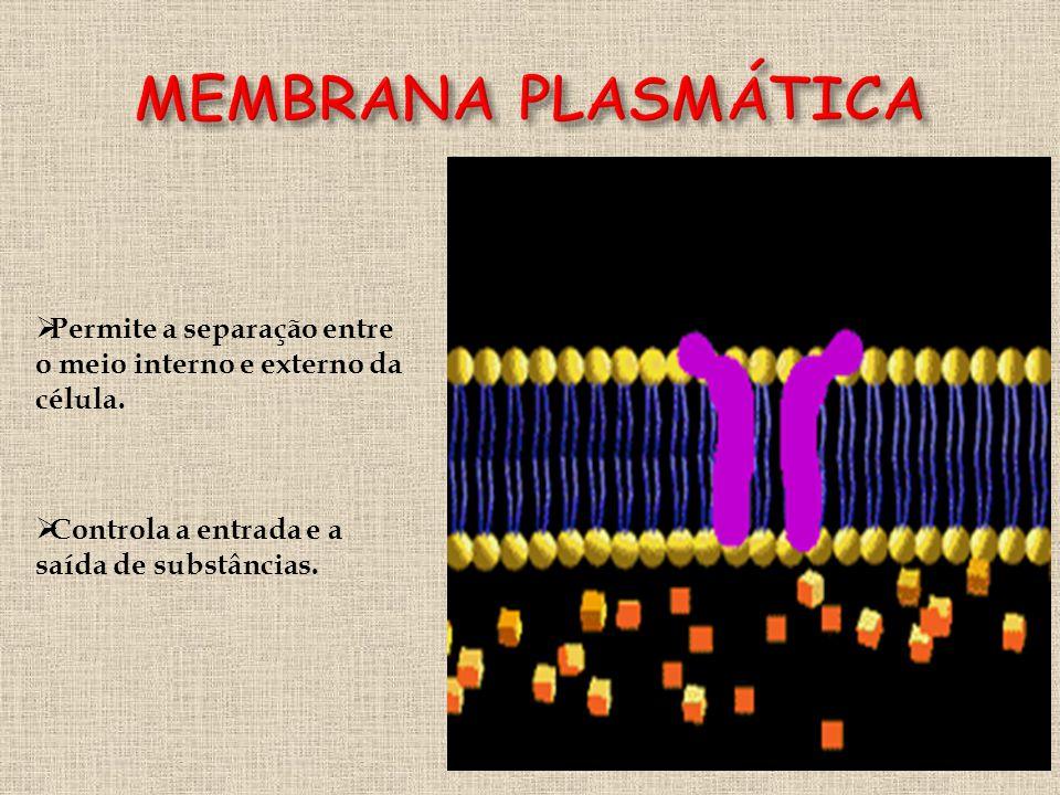  Permite a separação entre o meio interno e externo da célula.