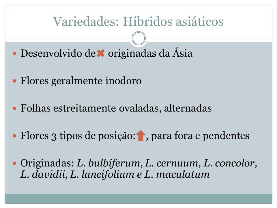Variedades: Híbridos asiáticos Desenvolvido de originadas da Ásia Flores geralmente inodoro Folhas estreitamente ovaladas, alternadas Flores 3 tipos de posição:, para fora e pendentes Originadas: L.
